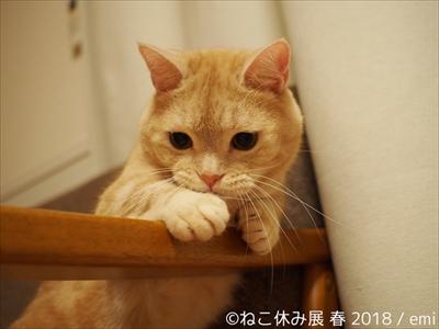 ねこ休み展・名古屋