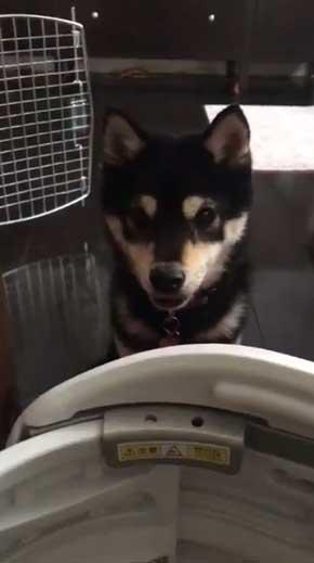 犬語 訴える 犬 しゃべる 言葉 話す