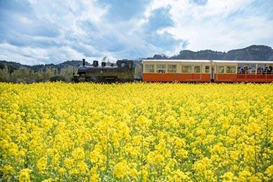小湊鐵道 菜の花畑 春 養老渓谷 里山トロッコ列車