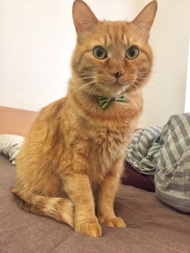猫 餌やり機 自動給餌器 裏技 発見 LUSMO