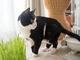 たまらんニャ 猫草に夢中になりすぎてついつい真顔になっちゃう猫ちゃんがかわいい