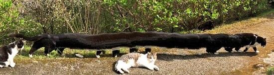 猫のパノラマ写真