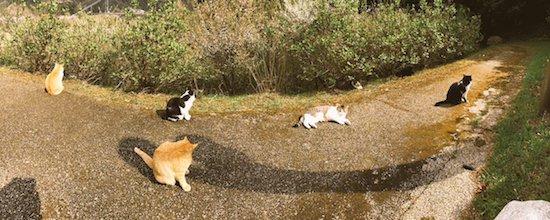 猫たちの写真