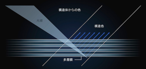 LEXUS モルフォ蝶 トヨタ レクサスLC