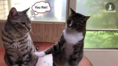 仲間を売る猫