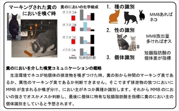 岩手大学 ネコの縄張り行動