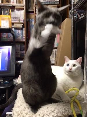 荒ぶる猫ちゃん