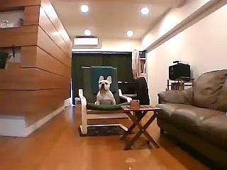 ペット用カメラ