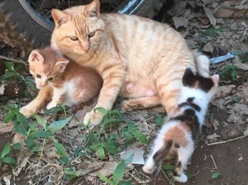 MR-Sと猫
