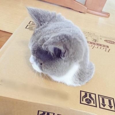 ダンボールに顔が埋まっている猫の番外編