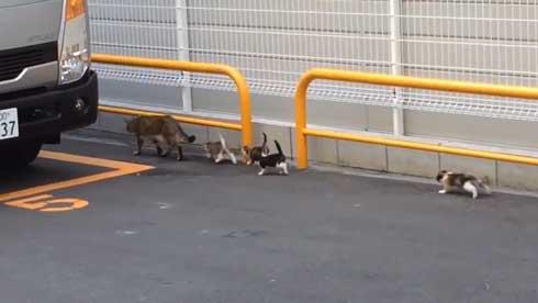 野良猫 親子 移動 子猫 誘導