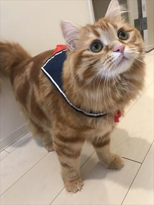 がっかり顔の猫ちゃん