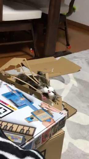 ニンテンドーラボ 残骸 遊ぶ 猫