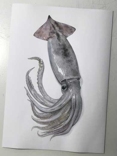 紙の上にイカが置いてある3度見した あまりにもリアルなイカの絵