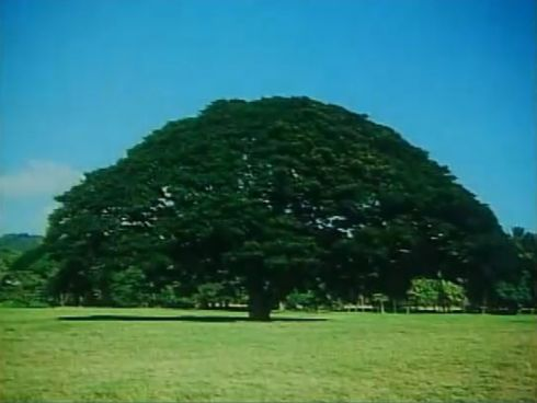 木 木 に 木 なる の この 気 なん