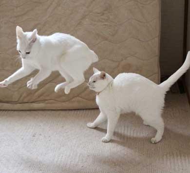 猫 膝の上 態度 でかい くつろぐ