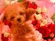 明日花キララ、無造作すぎる愛犬の片手持ちに物議 「首しめてんの?」「動物は飾りじゃない」