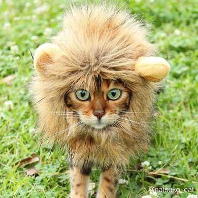 猫 ライオン なつこ かぶり物 ベンガル