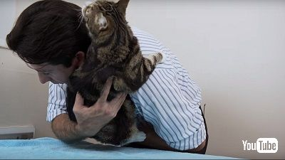 猫の抱き上げ方