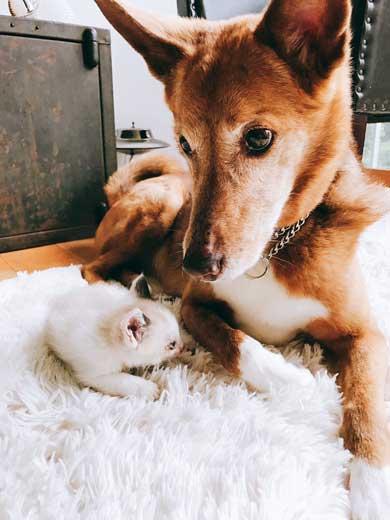 仔猫 引き取り 喜ぶ 犬 保護 幸せ