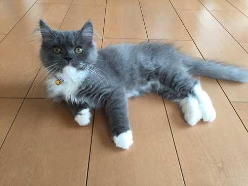 猫 お兄ちゃん 大きくなった 子猫 成長 記録
