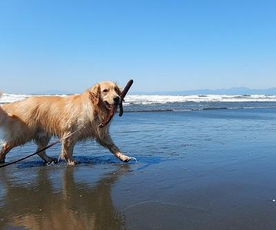 こー君 サーフィン