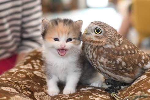 猫 フクロウ モフり 三世代 猫カフェ フクロウコーヒー