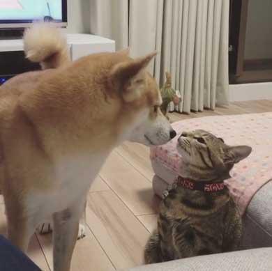犬 猫 仲良し 動画 ハル ムギ 添い寝 ハグ