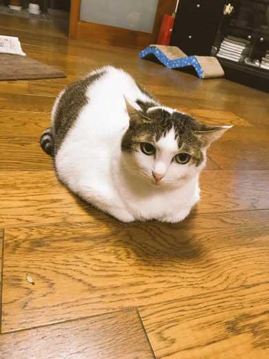 猫 一回り 大きい デカ 丸い