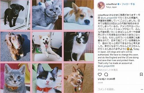 ローラ 保護猫 保護犬 保健所 アニマルシェルター 滝川クリステル ダレノガレ明美 Instagram