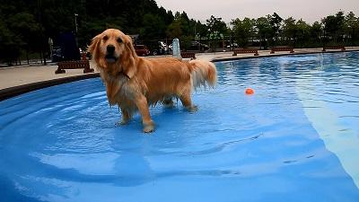 こー君 プール