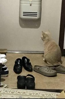 もみくちゃ待ちの猫