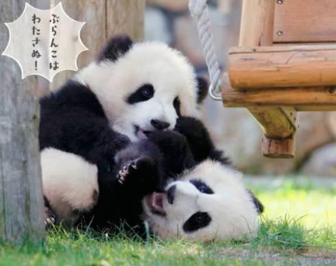 パンダでおぼえる ことわざ慣用句