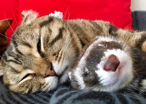 メンズエステ フェレット パック 猫 仲良し ぷく