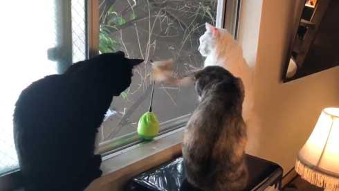 猫 おもちゃ 興味がない 自動 猫じゃらし 無関心