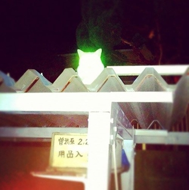 心霊写真 猫神 ねこ ネコ 超常現象 NMR