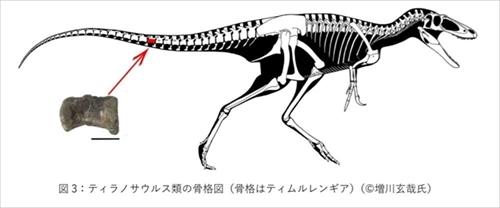 ティラノサウルス類の化石発見