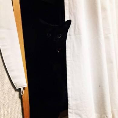 深淵のネコ