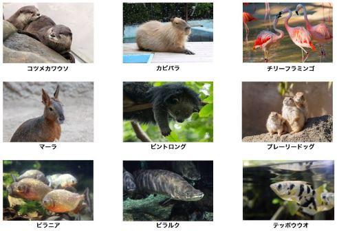 八景島シーパラダイス 横浜 アクアミュージアム 水族館 25周年 リニューアル