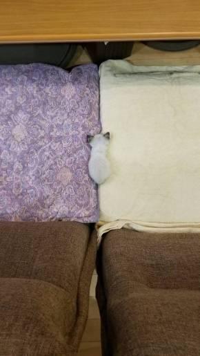 大きなベッドと子猫