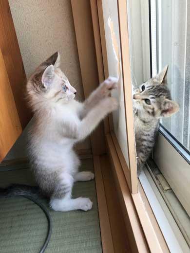 猫 2匹 仲良し 指 丸 突っ込んでくる