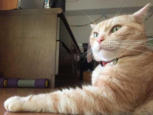 猫 ありえない 爪切り おとなしい 堂々 態度