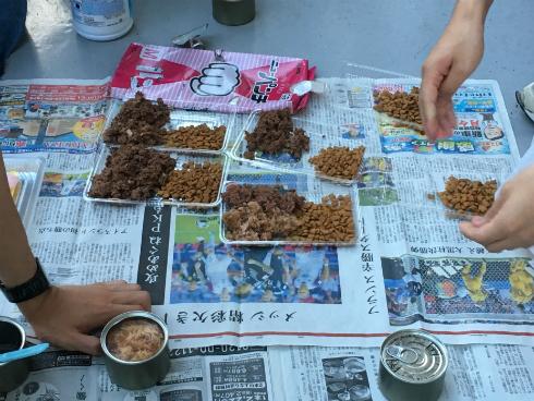 京都大学 猫のご飯