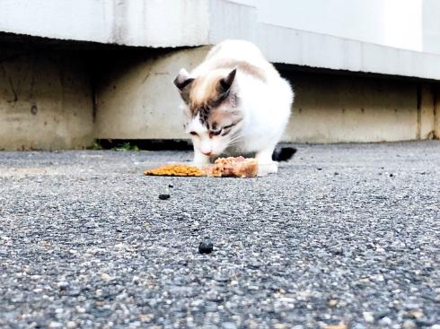 京都大学 大学猫