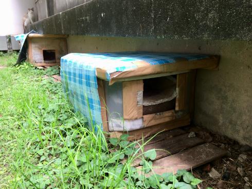 京都大学 ねこハウス