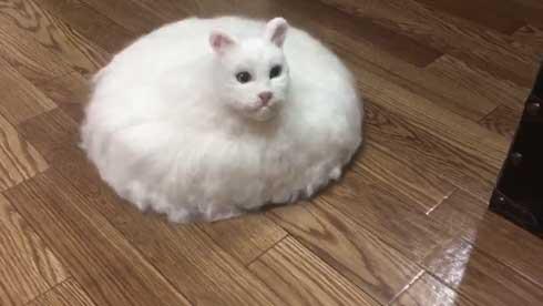 ネコ ルンバ 雑種 猫 合体 羊毛フェルト 怖い