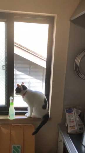 変な立ち方 猫 サムズアップ かっこいい ポーズ
