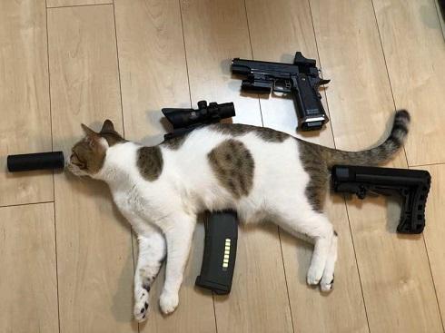 猫 メイン 武器 銃