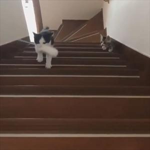 階段を登る猫ちゃんたち
