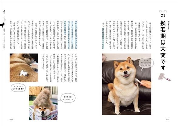 柴犬ハナちゃん